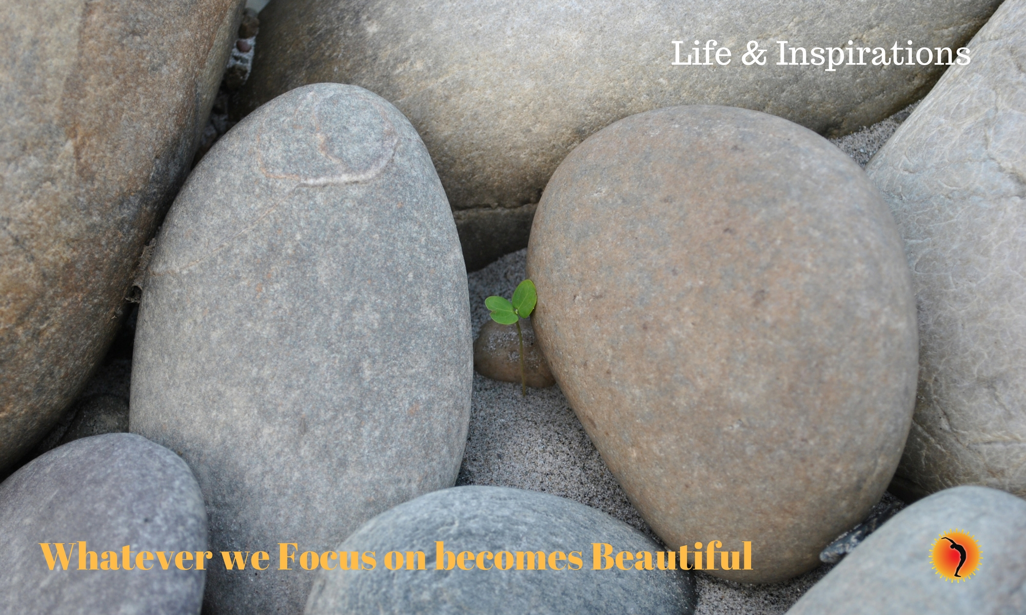 Whatever we focus on becomes beautiful